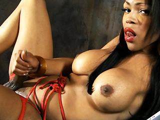 Sheeba starr  divine ebony ts sheeba delight herself. Tiny ebony TS Sheeba delight herself